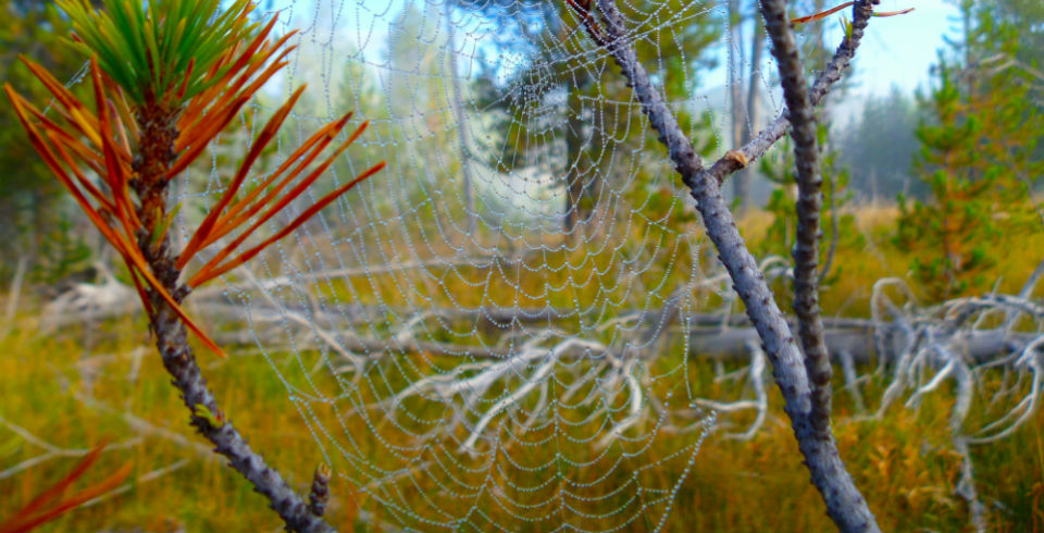 Spiderweb-web