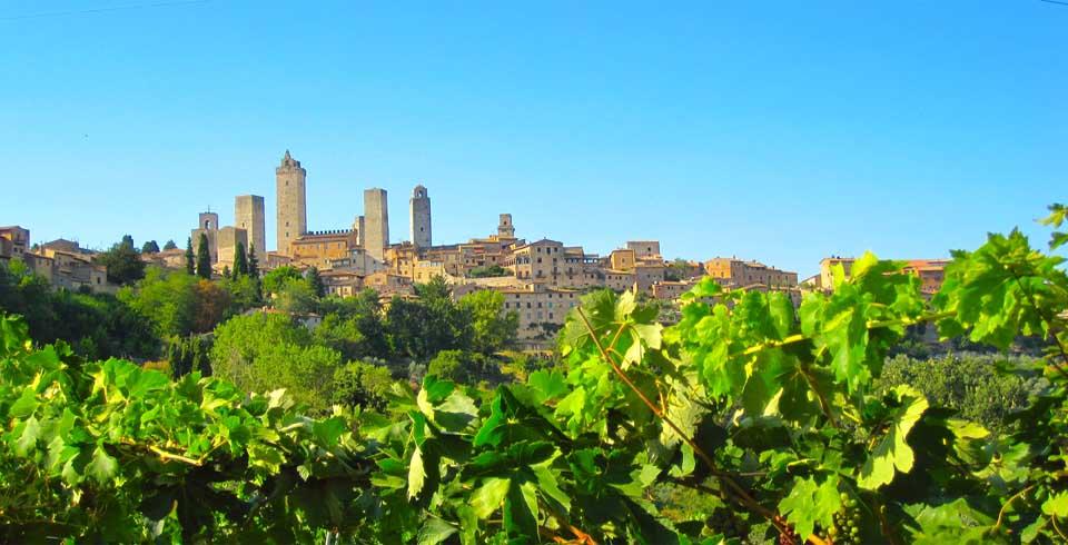Vines and Village-1